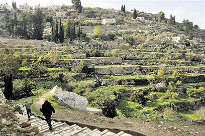 Battir terraces (Photo: Friends of the Earth Middle East)