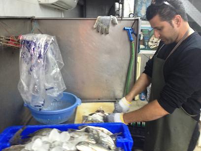 דייג, אוהב דגים? (צילום: יניב אמר) (צילום: יניב אמר)