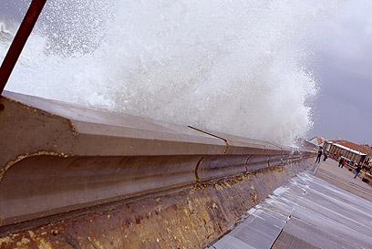 נמל יפו (צילום: טל הולצמן) (צילום: טל הולצמן)