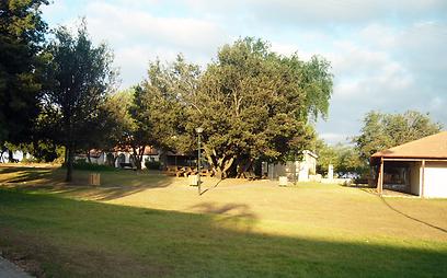 חקלאי ליברלי. מושב שתולה (צילום: באדיבות תנועת אור) (צילום: באדיבות תנועת אור)