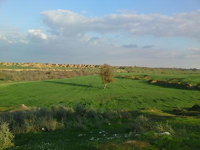 שטחים ירוקים במושב יתד (צילום: דודי אלון)