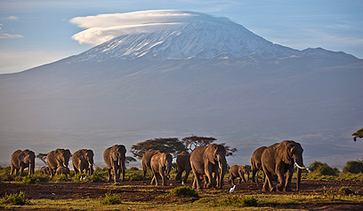 פילים על רקע הקילימנג'רו בטנזניה (צילום: AP)