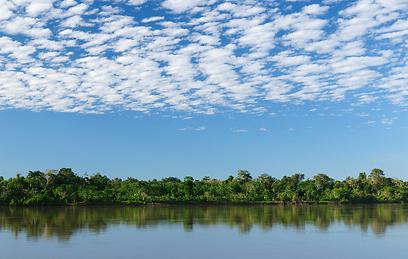 ממעוף הציפור הכל נראה שונה. יערות הגשם של פרו (צילום: shutterstock) (צילום: shutterstock)