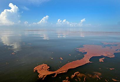 """""""יש סיכון של נפט שיישפך לים ויהרוג את החי והצומח - כמו במפרץ מקסיקו"""" (צילום: AP)"""