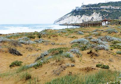 יורד אל חוף המים. רכס סולם צור (צילום: יניב אלון, טבע הדברים) (צילום: יניב אלון, טבע הדברים)