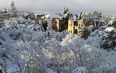 שלג בגבעת חנניה בירושלים (צילום: אליצפן רוזנברג) (צילום: אליצפן רוזנברג)