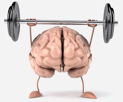 גם במהלך החיים הבוגרים, המוח מסוגל להשתנות (צילום: shutterstock) (צילום: shutterstock)