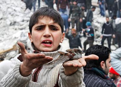 ילד מראה ציפור שנפצעה בהפצצה בחלב (צילום: AP)