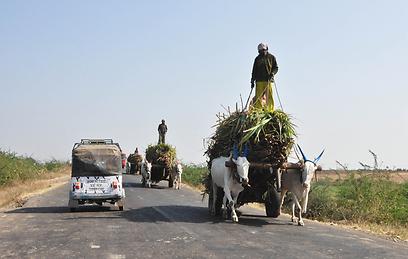 מראה טיפוסי בכביש המהיר (צילום: יוחאי ומיכל דויטש) (צילום: יוחאי ומיכל דויטש)