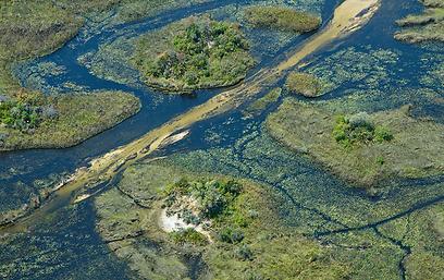 הדלתא של נהר האוקוונגו ממעוף הציפור (צילום: מולה יפה) (צילום: ) (צילום: )