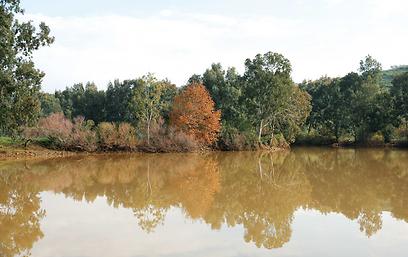 מאגר מים מעל הירדן התמלא ונראה כמו אגם שקט ורגוע (צילום: אודי רן, טבע הדברים) (צילום: אודי רן, טבע הדברים)