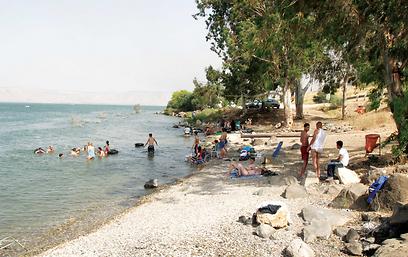 מי הכינרת שהתייבשו, חשפו קטעי חוף נמוכים, שמשמים רוחצים. חוף הדקל  (צילום: אודי רן, טבע הדברים) (צילום: אודי רן, טבע הדברים)