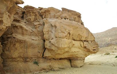 החול יוצר בהר אמיר וסביבתו נוף ייחודי ופראי (צילום: אודי רן) (צילום: אודי רן)