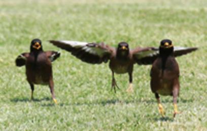 הנחיתה (צילום: אודי רן) (צילום: אודי רן)