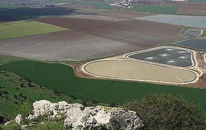 מרבד שטיחים צבעוני בעמק חרוד (צילום: שמעון לב)