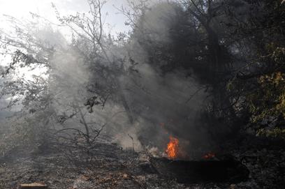 השריפה באשדוד, היום (צילום: בני דויטש)