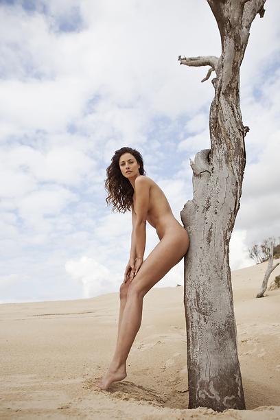על אם הדרך עץ עומד.  בוגנים פטה מורגנה  (צילום: אלון שפרנסקי) (צילום: אלון שפרנסקי)