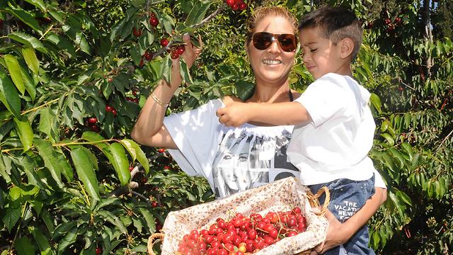 За дополнительную плату можно взять корзинку с ягодами домой. Фото: Авиягу Шапира