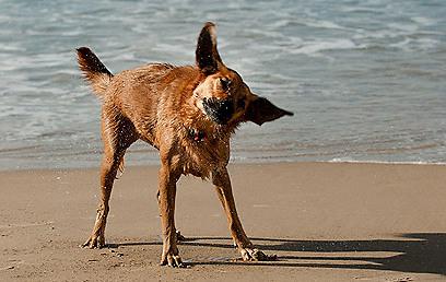 גם כלבים באים לים להתקרר מהחום. חוף גורדון (צילום: ירון ברנר)