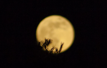 הסופר-ירח מעל מושב נס הרים  (צילום: יקי רפאל) (צילום: יקי רפאל)