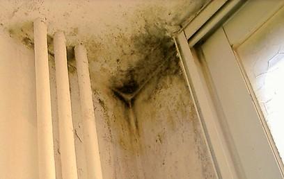 היזהרו: רטיבות בדירה עלולה להוביל לטחב ולמחלות