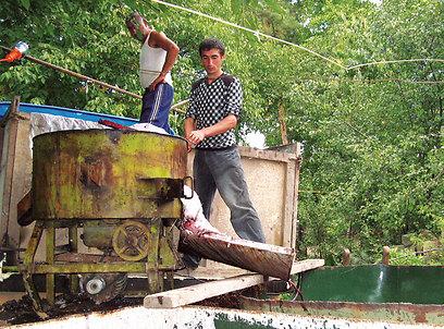 הליך הפקת יין מהבציר היומי בכפר קארמיר (ירון וייס, טבע הדברים) (ירון וייס, טבע הדברים)