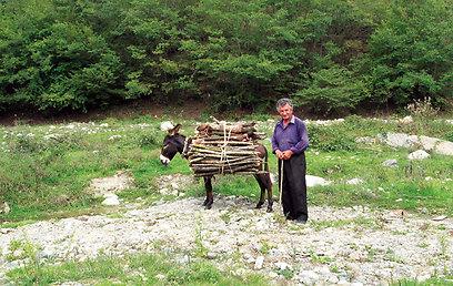 איסוף עצים להסקה בחורף סמוך לכפר אוורטראנוץ (ירון וייס, טבע הדברים) (ירון וייס, טבע הדברים)