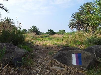 הפרויקט התחיל ב-2003 ועדיין לא יושם סופית. שביל סובב כנרת (צילום: זיו ריינשטיין) (צילום: זיו ריינשטיין)