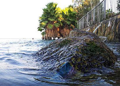 """לפעמים הוא עובר במים. השביל מוצף למרגלות ימק""""א (צילום: זיו ריינשטיין) (צילום: זיו ריינשטיין)"""