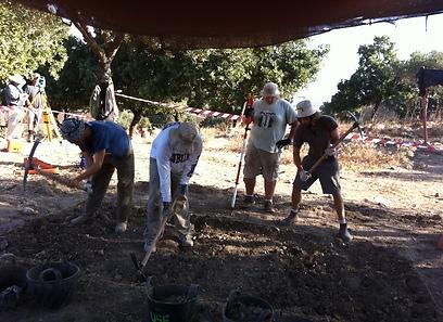 מתנדבים בחפירות שיחין. יהיו עונות חפירה נוספות (צילום: משלחת חפירות שיחין)