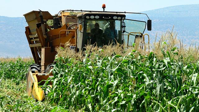 הפתרון האמיתי - חקלאות אקולוגית (צילום: יעל שביט) (צילום: יעל שביט)