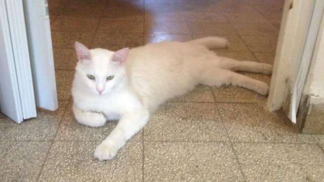 פולי החתול. היה הראשון לזהות (צילום: יוסי כהן) (צילום: יוסי כהן)