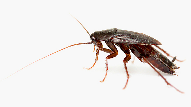Were dried insects in threat envelope? (Photo: Shutterstock)