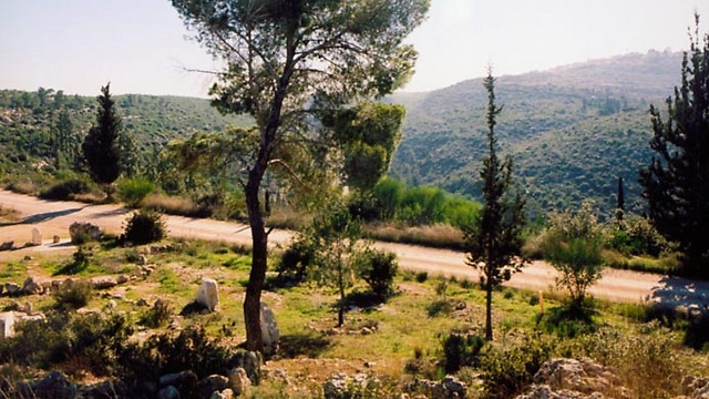 Eshtaol Forest near the city of Beit Shemesh, where Vardit Bakraknot's body was found (Photo: KKL)