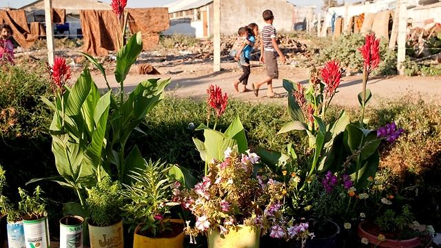 """קרוביה של איה מגדלים עשרות צמחים ופרחים מחוץ לביתם. אחיותיה מספרות כי היא מגנה בחירוף נפשה על הגינה ועוזרת בהשקייתה (צילום: ס. בולדווין, סוכנות האו""""ם לפליטים) (צילום: ס. בולדווין, סוכנות האו"""