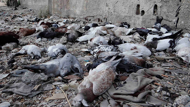 Dead animals from chemical attack (Photo: Reuters)