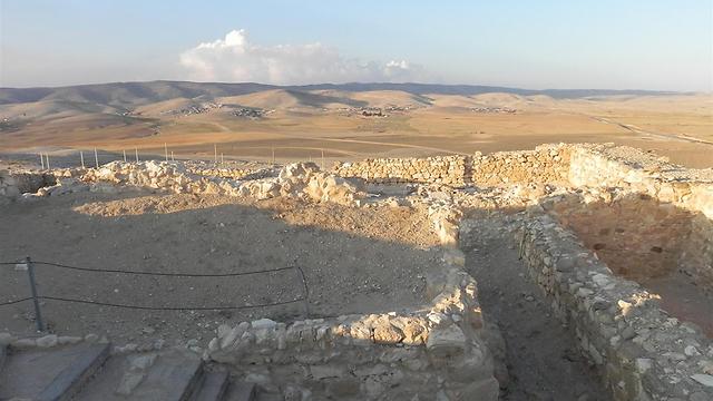 תל ערד (צילום: זיו ריינשטיין) (צילום: זיו ריינשטיין)