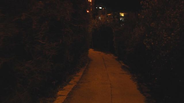 החורשה בשכונת סנהדריה, אמש (צילום: אלי מנדלבאום) (צילום: אלי מנדלבאום)