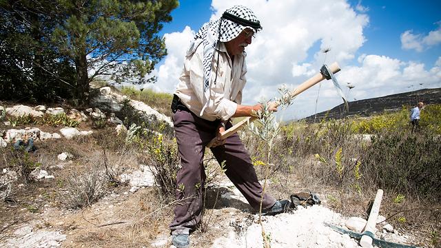 מעבדים את האדמה (צילום: ארגון יש דין)