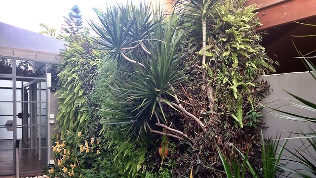 """""""אפקט של יער"""". הקיר של רוני פלד (צילום: גיא בר-נס) (צילום: גיא בר-נס)"""