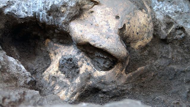 הגולגולת באתר החפירות ב-2005 (צילום: AP)