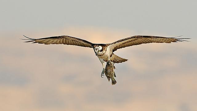 שלך צד דג בצפון הארץ (צילום: פאבלו רודאף)