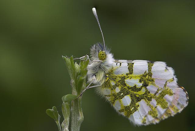 כתום כנף באזור המרכז (צילום: דני גדלביץ)