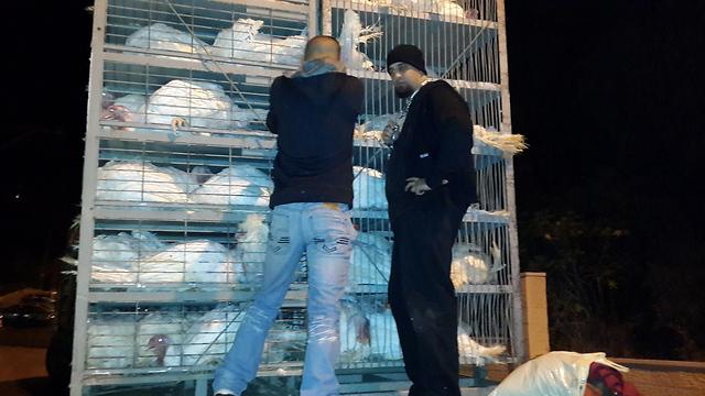 (צילום: חזית לשחרור בעלי חיים בישראל)