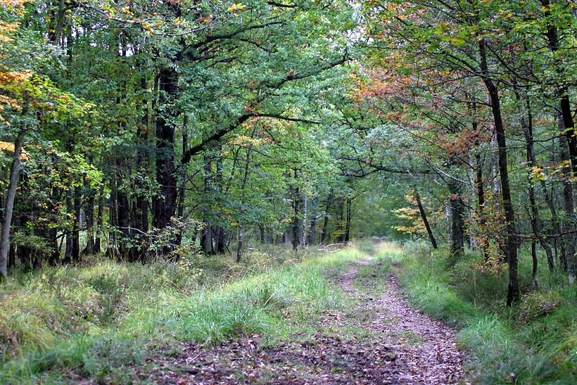 כאן יפה הלכה לאיבוד. יער רמבוייה (צילום: shutterstock)
