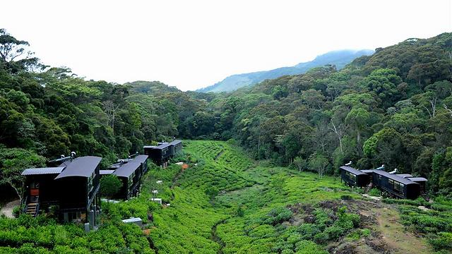 מלון יערות הגשם, סרי לנקה (צילום: באדיבות אגודה) (צילום: באדיבות אגודה)