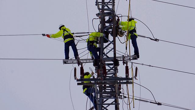 עובדי חברת חשמל בסוף השבוע. הכול בגלל קריסת עצים (צילום:  אלי קבקוב) (צילום:  אלי קבקוב)