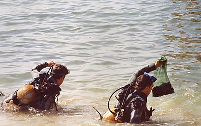 """ד""""ר סטרמן וד""""ר גרינספן שולים אוצרות זוחלים מקרקעית הים (צילום: עמותת פתיל תכלת) (צילום: עמותת פתיל תכלת)"""