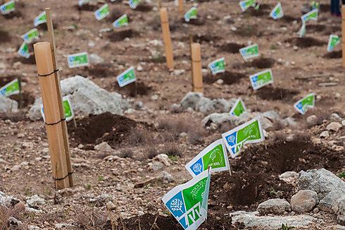JNF trees planted for Tu BiShvat (Photo: Ohad Zwigenberg)