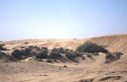 הדיונה הגדולה באשדוד. 1.6 מיליון שקל עולה לגור בסמוך (צילום: דפנה מרוז, החברה להגנת הטבע)